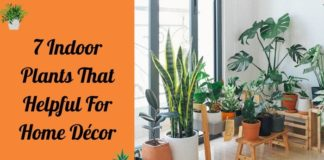 7 Indoor Plants That Helpful For Home Décor
