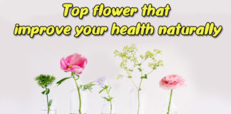 Top flower that improve your health naturally