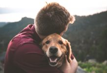 Taking Care of Your Pets